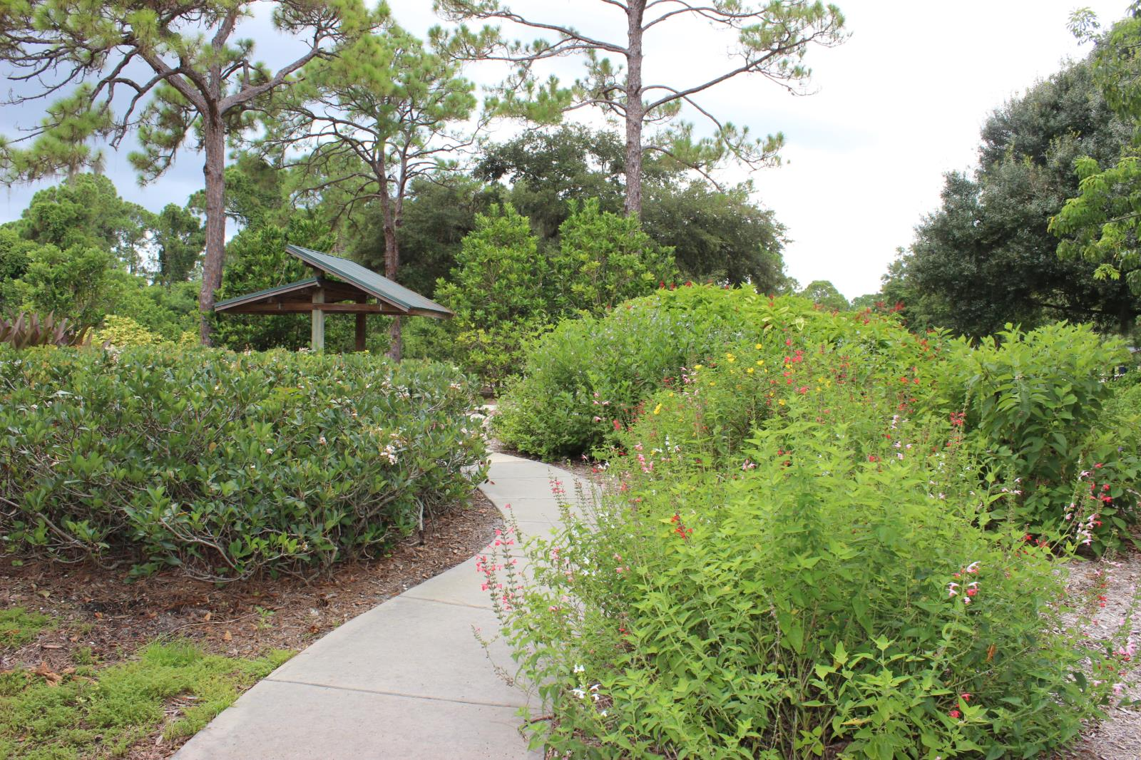 Pathway through ornamental plants